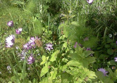 Le jardin l'été